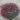 Dianthus_gratianopolitanus_Badenia