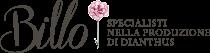 Floricoltura Billo-Specialisti nella produzione di Garofani – Vendita garofani