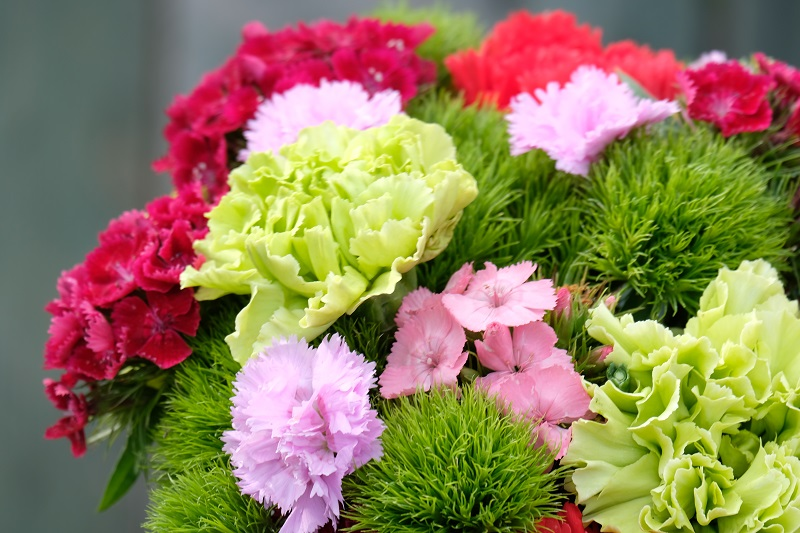Per la festa della mamma un bel mazzo di garofani colorati è certamente un omaggio gradito.