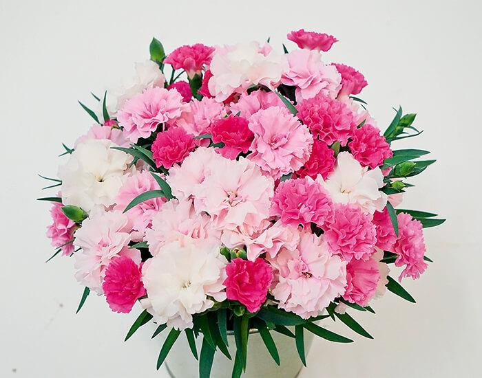 Dianthus I❤U garofano I Love You è il garofano da vaso più interessante dell'anno! Tre cromie durante la fase di fioritura. Da un rosa più carico al colore tenue. Caratteristica che rende unico questo garofanino, è certamente una dei fiori da regalare per la festa degli innamorati.