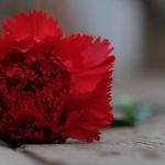 Garofano Standard Carnation Dgd Arona è un classico nelken karafil karafiàt nelliku nellik anjer goździk cravo garoafa гвоздика каранфил nagelj Nelke nejlika szegfű гвоздика dal colore rosso classico, petalo frangiato.