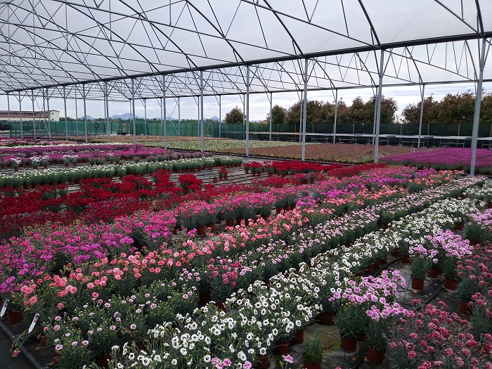 promozione di piante perenni da giardino per uso vaso, aiula, bordura, patio. Offerta speciale con lo sconto dedicato.